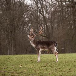 Dusseldorf Grafenberg Wildlife Park