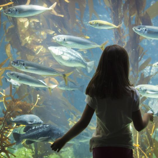 The Aquarium of Genoa