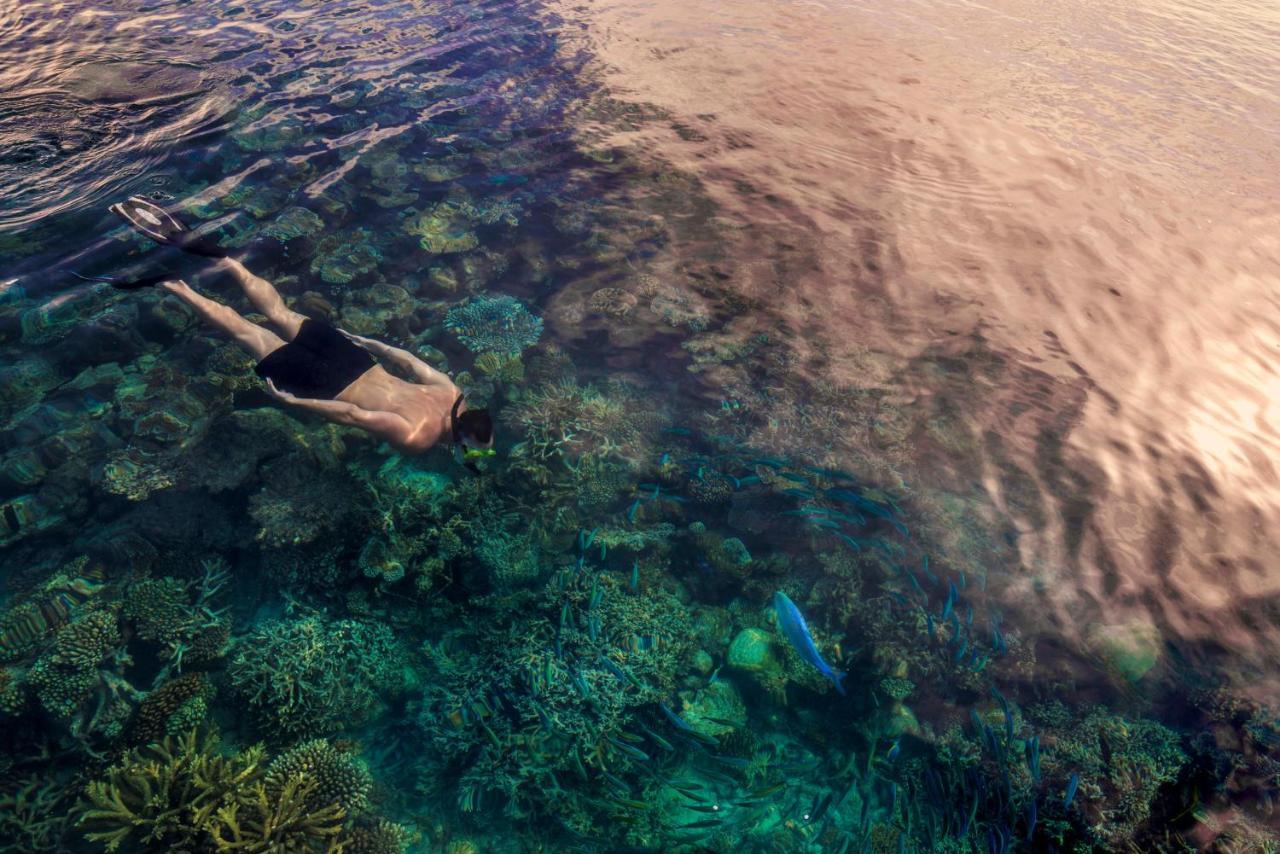 manta rays hanifaru bay