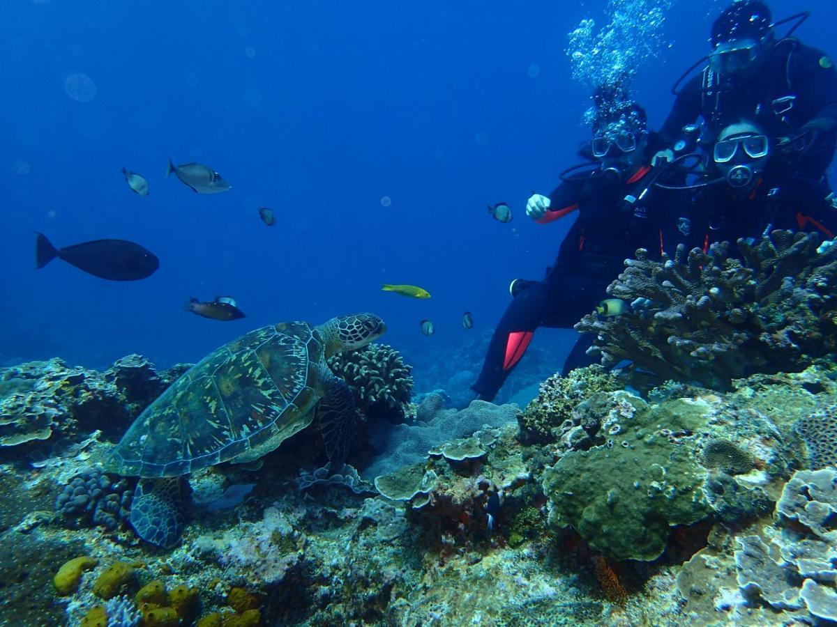 綠島潛水推薦、珊瑚礁、潛水費用、住宿、活動預約方式、綠島交通 Green Island Scuba Diving Taiwan