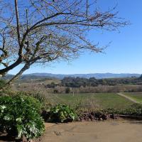 Vineyard Views at the KC House